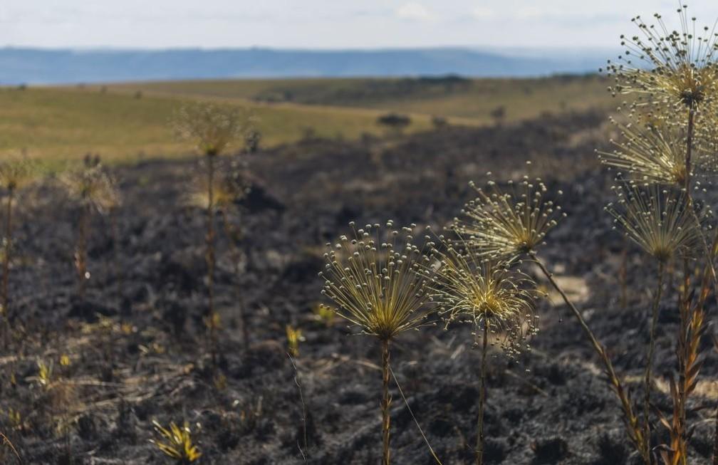 Incêndio no Parque Nacional da Serra da Canastra em 2017 — Foto: UFMG/Divulgação