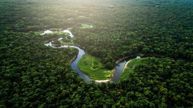 Pesquisadores mapearam o subterrâneo das florestas (Foto: Getty Images)