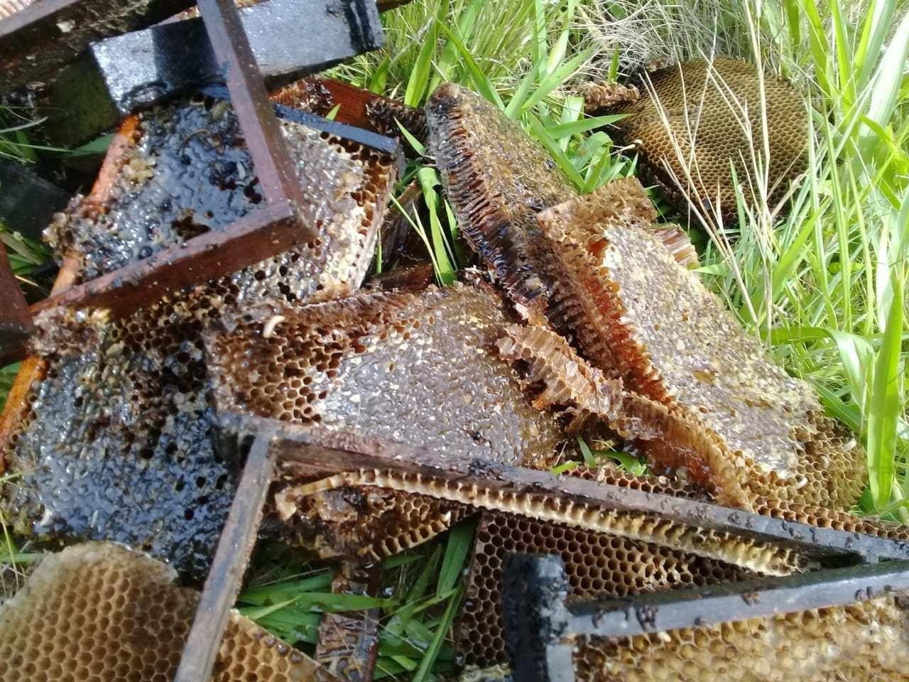 Por receio de contaminação, apicultores jogam fora todo o mel produzido pelos insetos (Foto: Salvador Gonçalves/ Apicruz)