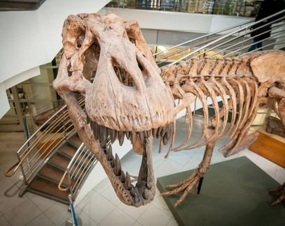 Cerca de 2,5 bilhões de Tiranossauros Rex habitaram a Terra, estima estudo