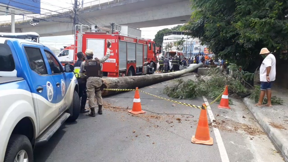 Árvore cai em cima de veículo e deixa feridos em Salvador — Foto: Ciro Brigham/TV Bahia
