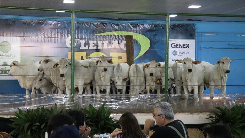 leilao-gado-genex (Foto: Divulgação/Genex)
