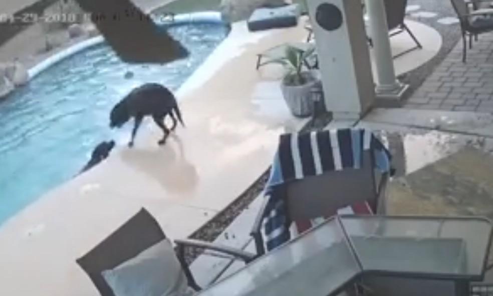 Cachorro pula em piscina para resgatar colega nos EUA (Foto: Laurie Sorsen Becerra/Facebook)