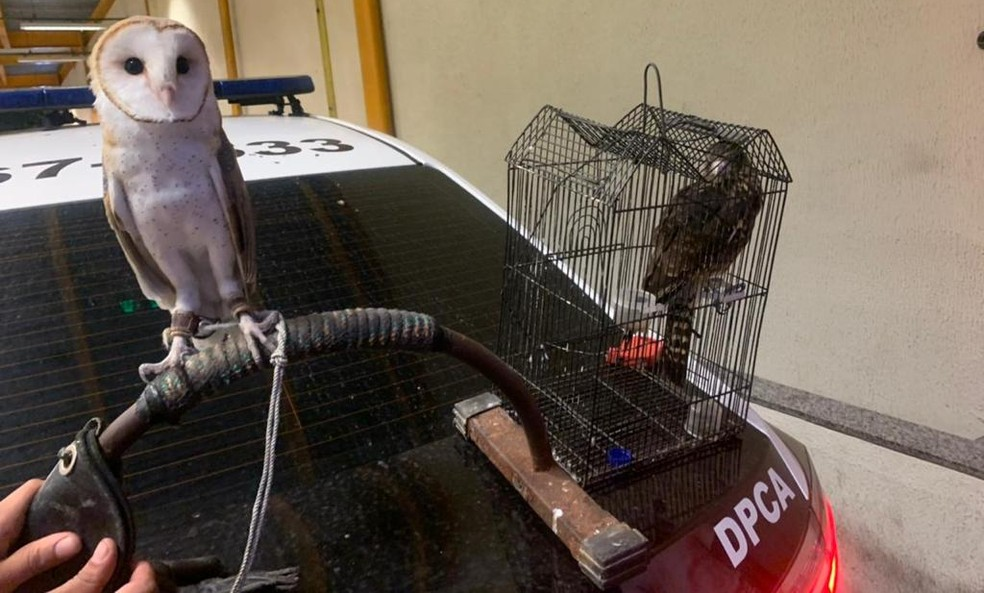 Aves foram resgatadas da casa de suspeito  — Foto: Divulgação