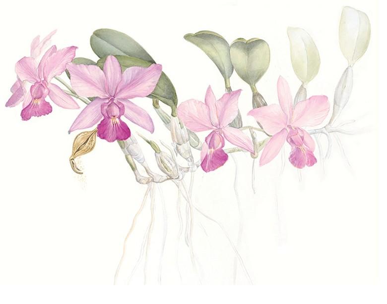Botanica (Foto:  )