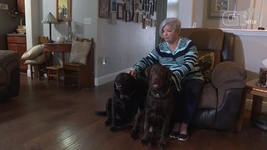 Cachorras buscam ajuda de vizinha e salvam vida de dona nos EUA