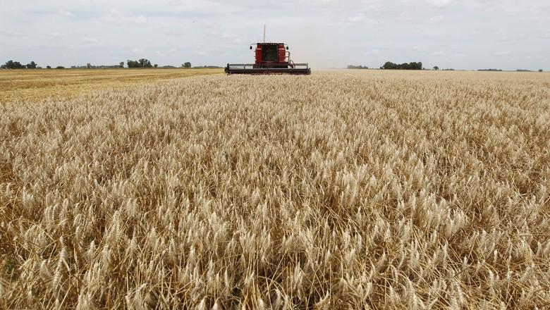 agricultura-trigo-argentina (Foto: Reuters)