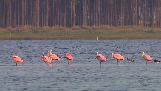 Santuário de aves migratórias no RS reúne mais de 250 espécies