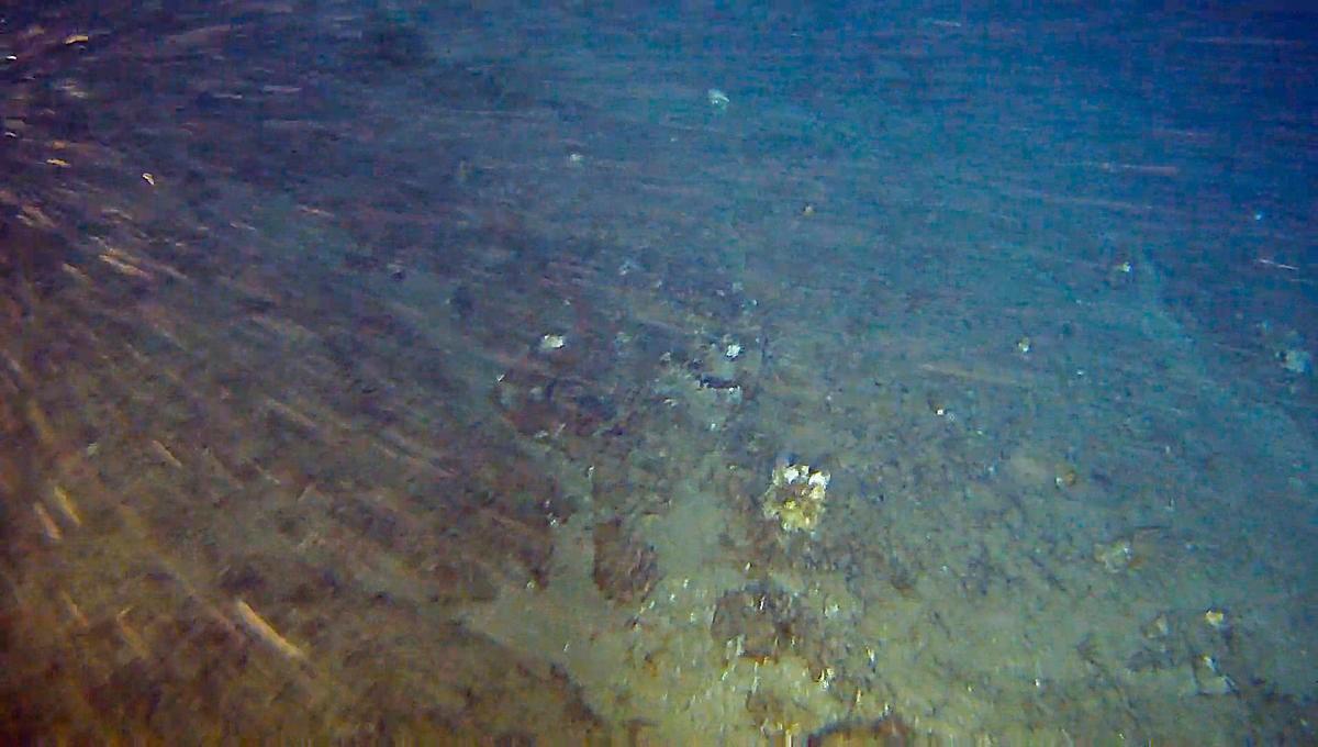 Descoberta impede a exploração de petróleo na região (Foto: Greenpeace)