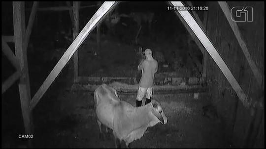 Fazendeiros usam câmeras de segurança e constroem casa perto de animais para evitar abigeatos no RS