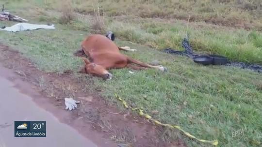 Motociclistas batem em cavalo e são atingidos por carro e caminhão na SP-340; um homem morreu