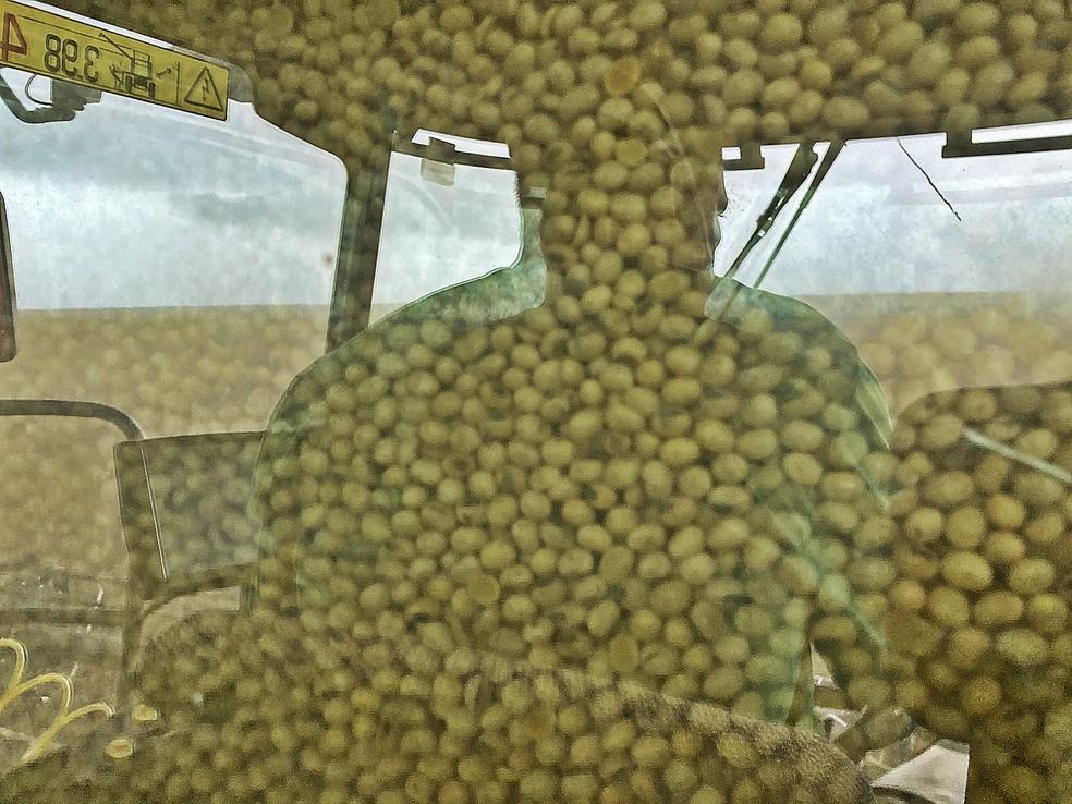 Os grãos ficam armazenados na parte de trás da colheitadeira — Foto: André Schaun