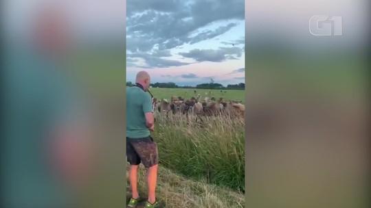 Homem faz 'serenata' para vacas com saxofone