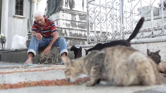 Ex-coveiro conta porque cuida, há décadas, dos 45 gatos que vivem em cemitério de Salvador