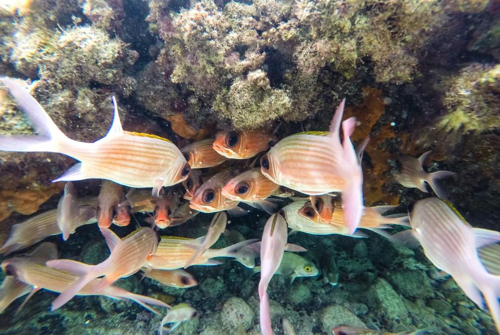 Peixes nadam em cardume na piscina natural do Pontal do Atalaia, em Fernando de Noronha — Foto: Fábio Tito/G1