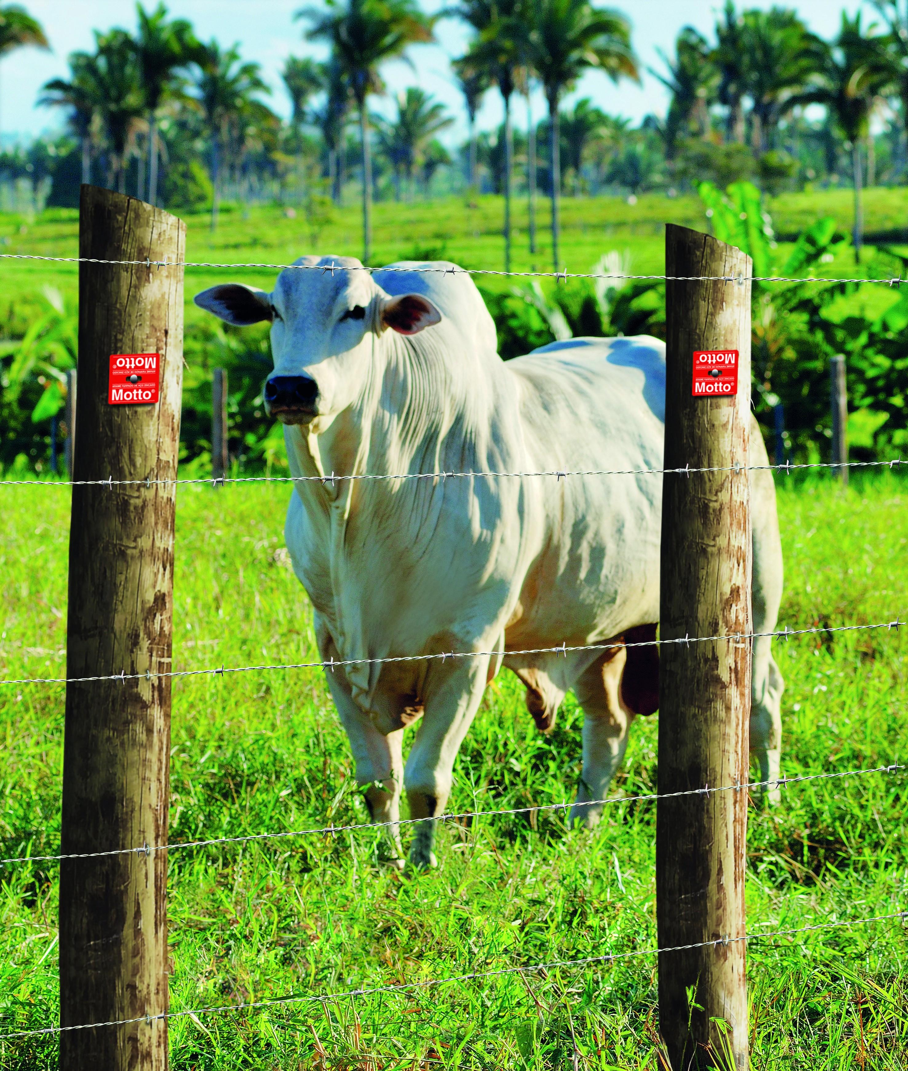 Maioria dos casos de RTP em bovinos ocorreu pela ingestão de pontas de arame (Foto: Divulgação)