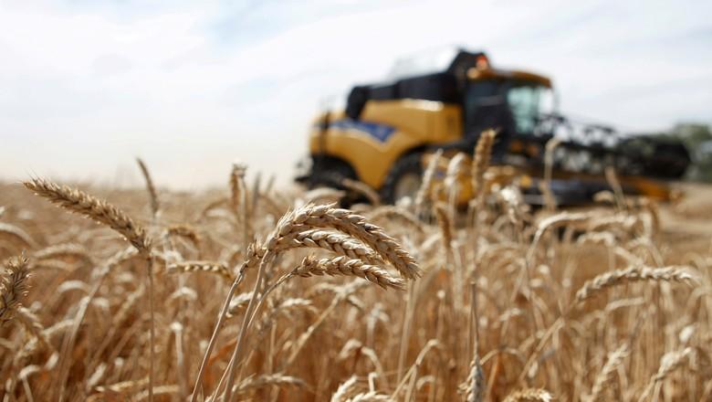 agricultura-trigo-russia (Foto: Reuters)