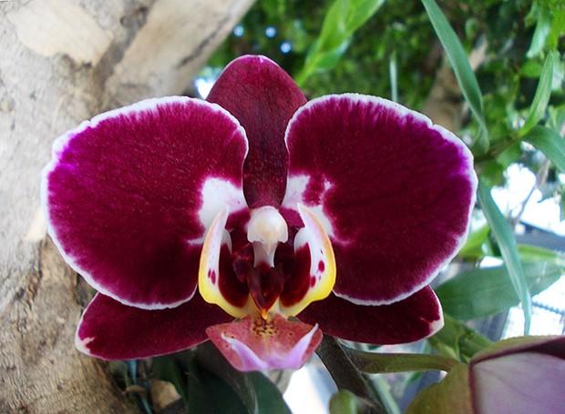 Nesta primavera, coloque uma orquídea na árvore (Foto: Divulgação)