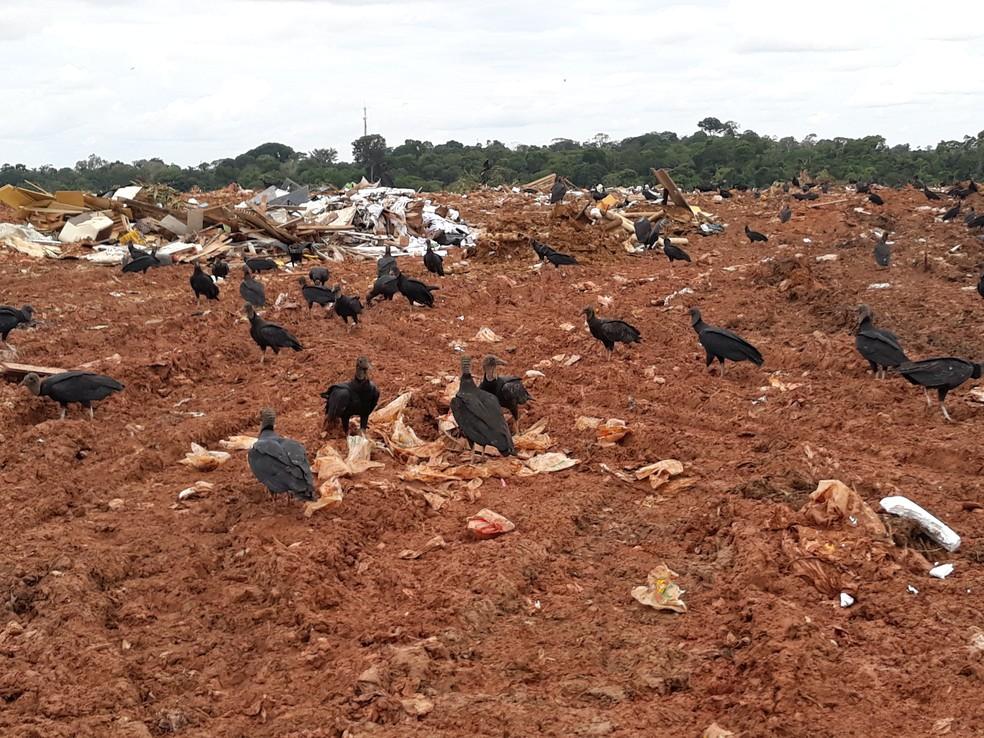 Operação foi realizada no lixão de Porto Velho — Foto: Superintendência Regional do Trabalho em Rondônia/Divulgação