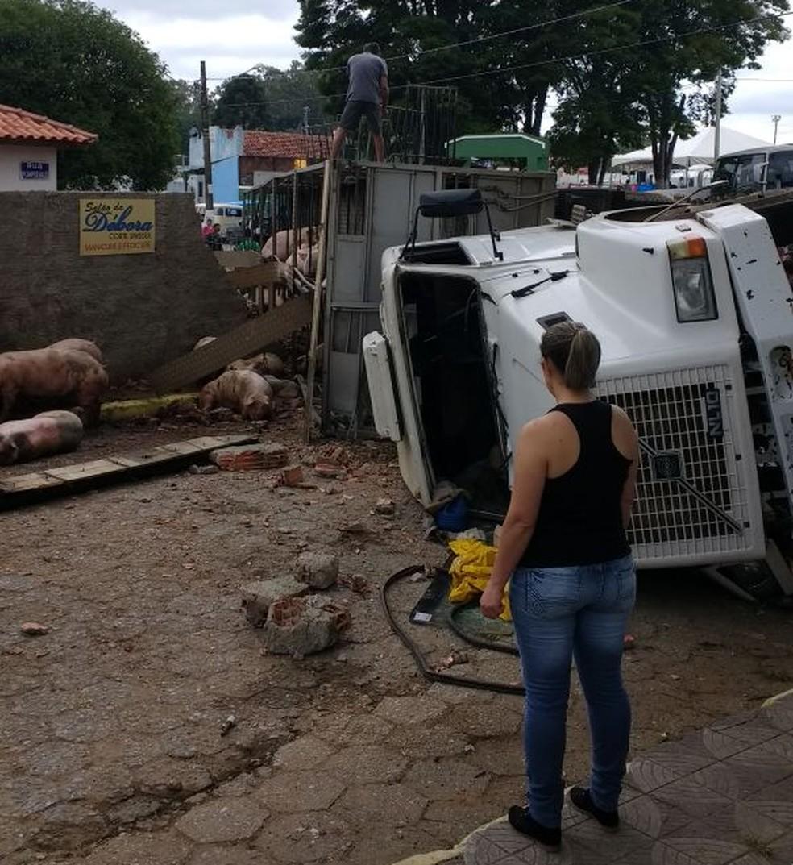 22 animais morreram por causa do acidente, segundo a PM (Foto: Robson Cirilo/Arquivo Pessoal)