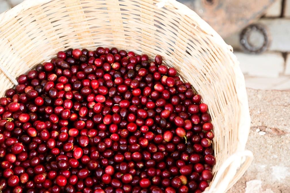 Experiência em rota de turismo no Sul de MG permite contato com café especial. (Foto: Divulgação/Rota do Café)