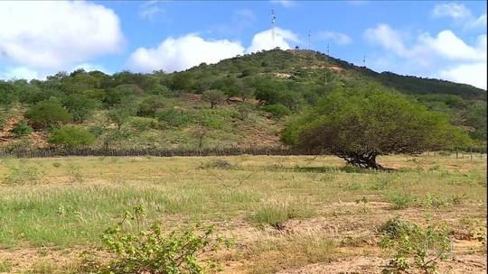 Chuva deixa sertão verde, mas é insuficiente para agricultura