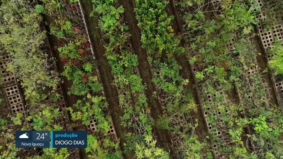 Segundo um dos sócios da empresa que cuida das mudas em Silva Jardim, os custos já somam R$ 1,8 milhão — Foto: Reprodução TV Globo