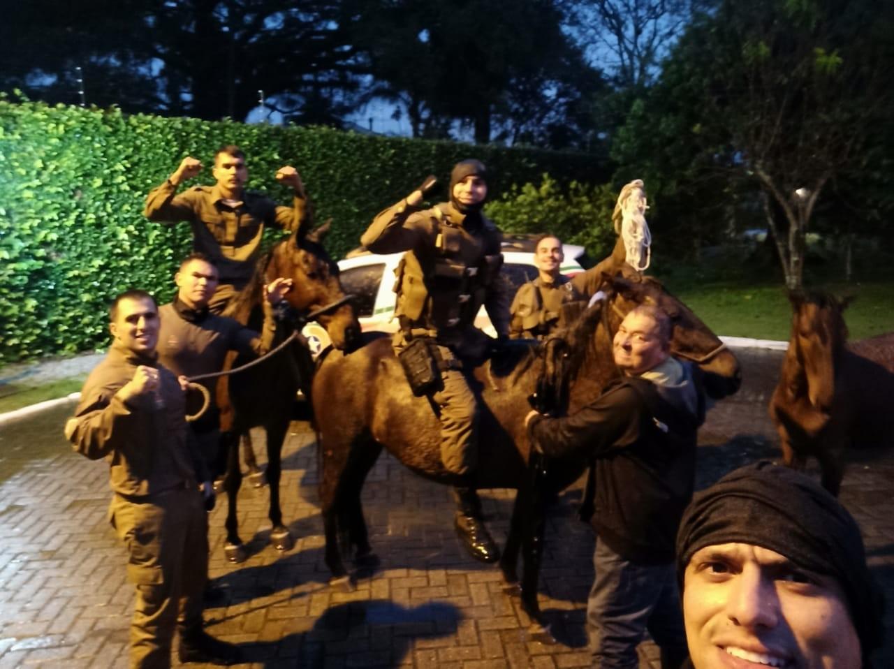 Três cavalos que estavam submersos em córrego alagado em Florianópolis são resgatados, VÍDEO