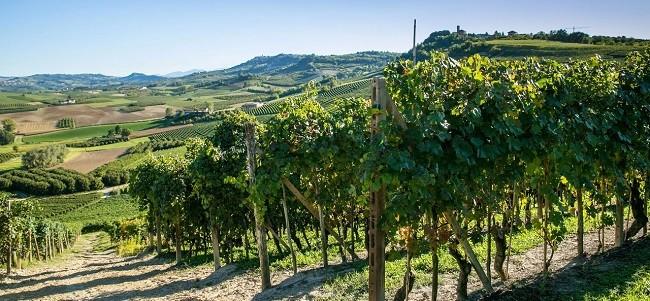 Bel Colle: vinhedos em áreas renomadas