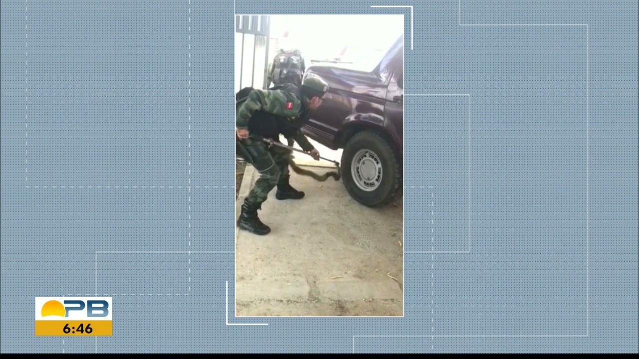 Jiboia de 1,5 metro é encontrada enroscada em carro estacionado em Patos, PB; veja vídeo