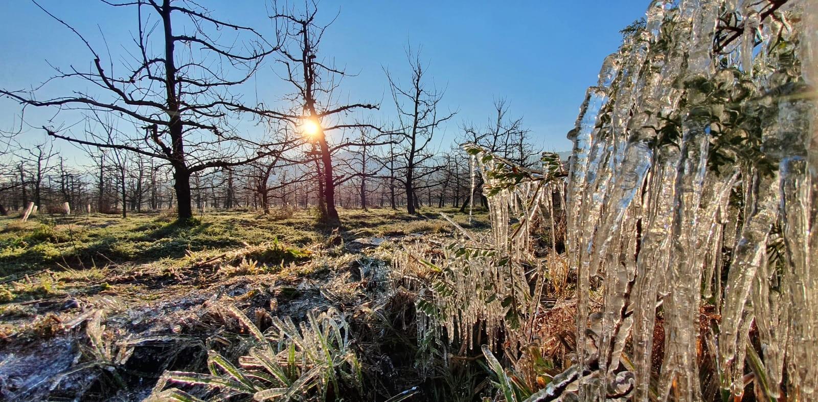 Serra de SC registra -3,8ºC, geada e tem água congelada; FOTOS