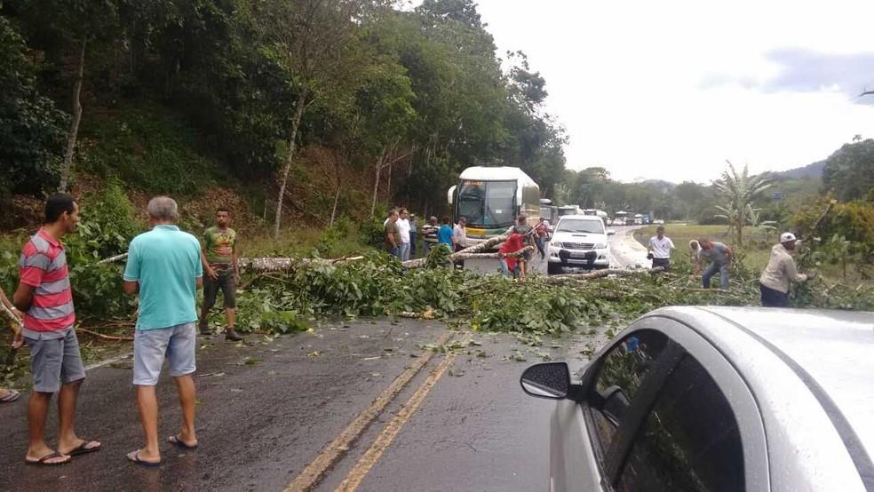Árvores caem e interditam trecho da BR-101, região sul da Bahia (Foto: Erlon Santos/Arquivo Pessoal)