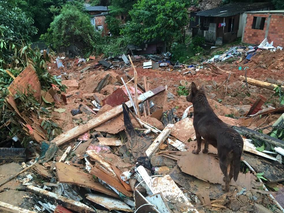 Morro do Macaco, em Guarujá (SP), registra deslizamentos de terra — Foto: Solange Freitas/G1