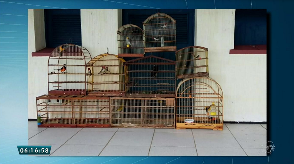 Além dos tatus, 75 pássaros foram apreendidos pela polícia. (Foto: Reprodução/TV Verdes Mares)