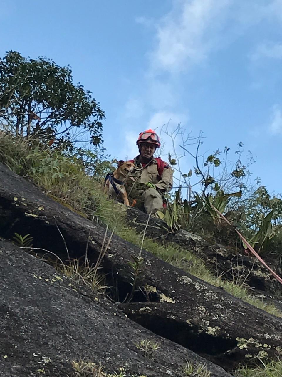 Bombeiros usam técnicas de escalada e rapel para resgatar cadela que ficou presa em pedreira no RJ - Notícias - Plantão Diário