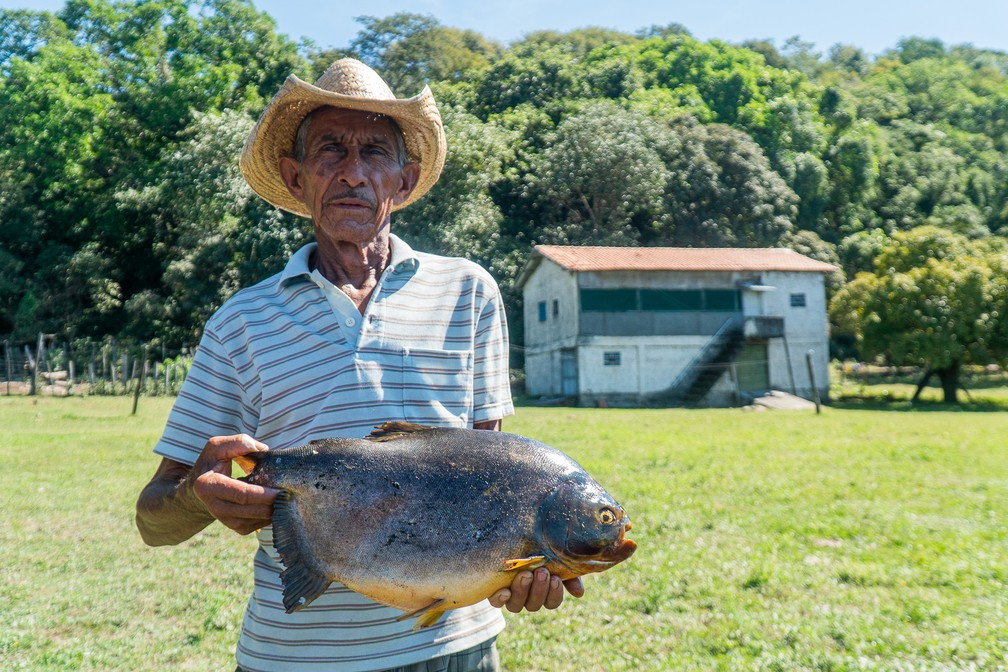 Waldemar Magalhães, segurando um pacu: ele e outros ribeirinhos moram perto da Serra do Amolar, no coração do Pantanal, e pescam apenas para subsistência — Foto: Eduardo Palacio/G1