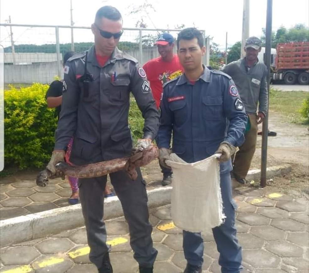 Bombeiros recolheram jiboia utilizando equipamentos de segurança adequados — Foto: Corpo de Bombeiros/Divulgação