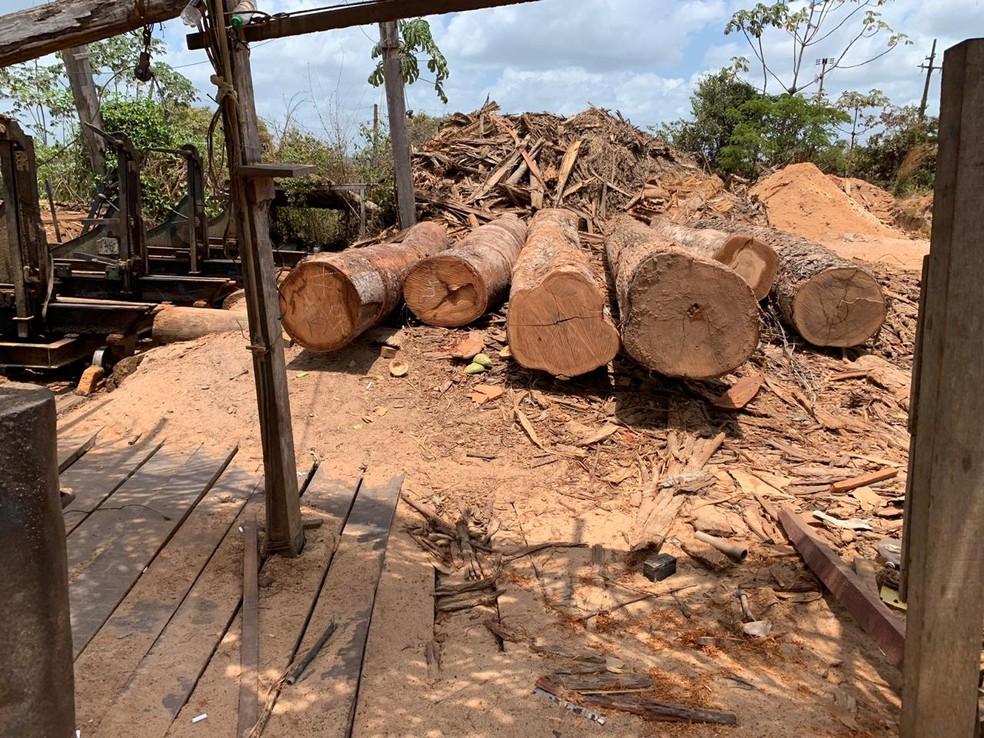 Mais de 500 metros cúbicos de madeira foram apreendidos em Nova Conquista — Foto: Divulgação/Polícia Federal
