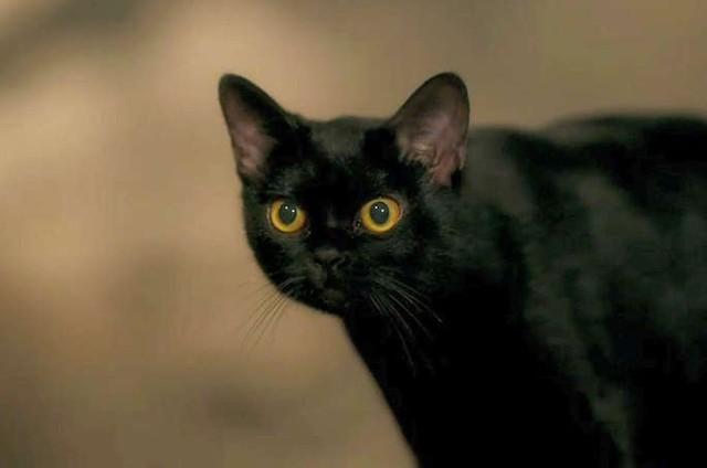O gato León (Foto: TV Globo)