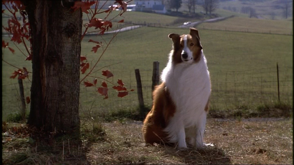 Lassie (1994) (Foto: Divulgação)