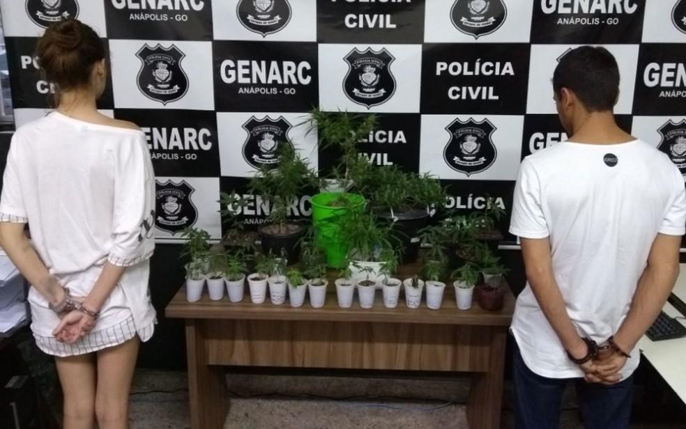 Casal preso com 28 pés de maconha em casa (Foto: Polícia Civil/Divulgação)