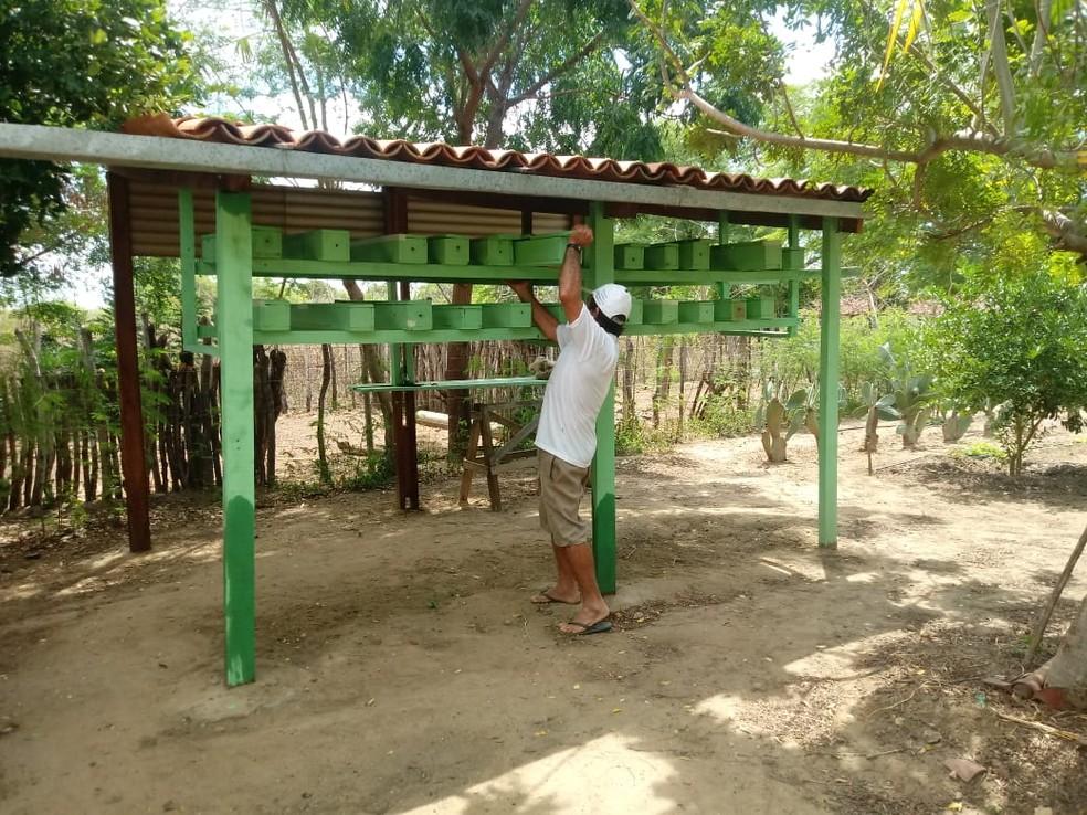 Novo meliponário instalado na comunidade Cabeço, interior do RN, vai beneficiar diretamente a oito famílias — Foto: Divulgação