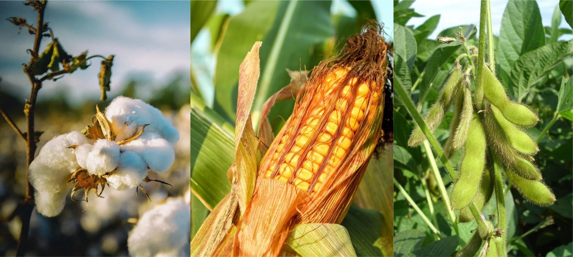 Cidade no oeste da Bahia fica em 2º lugar no ranking de produção agrícola do Brasil