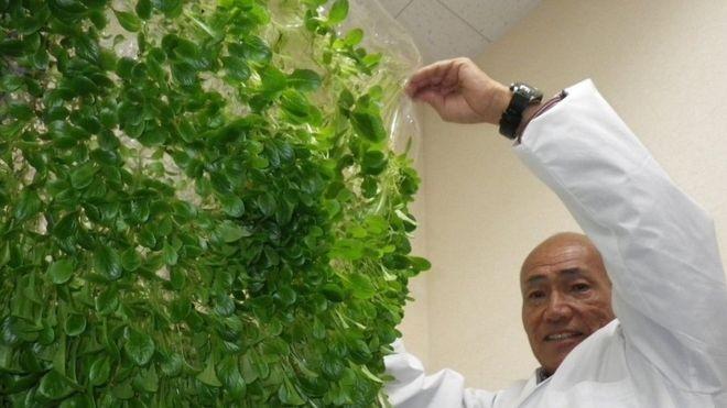 BBC: Yuichi Mori inspirou-se nas membranas usadas em rins artificiais para desenvolver películas de polímero para uso na agricultura (Foto: DIVULGAÇÃO/MEBIOL VIA BBC)