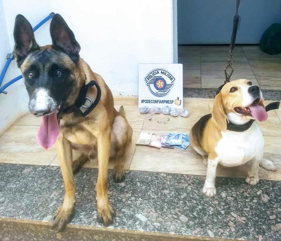 Cães da PM encontraram drogas na casa do suspeito em Araraquara — Foto: Polícia Militar/Divulgação