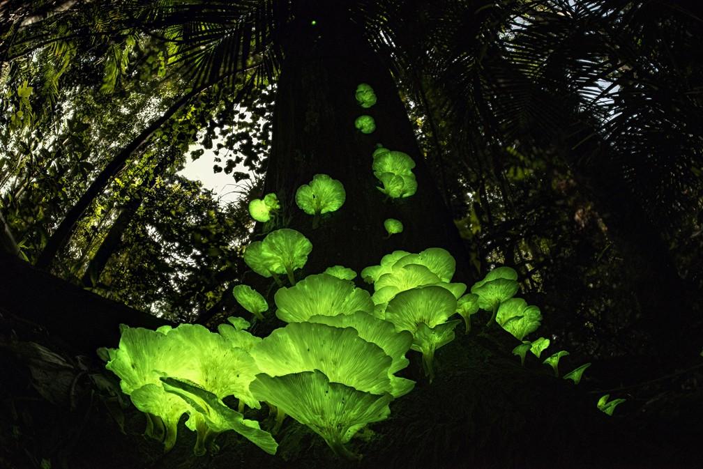 'Mágica do cogumelo', por Juergen Freund, Alemanha/Austrália. Juergen encontrou o fungo fantasma em uma árvore morta na floresta perto de sua casa em Queensland, Austrália — Foto: Juergen Freund/Wildlife Photographer of the Year