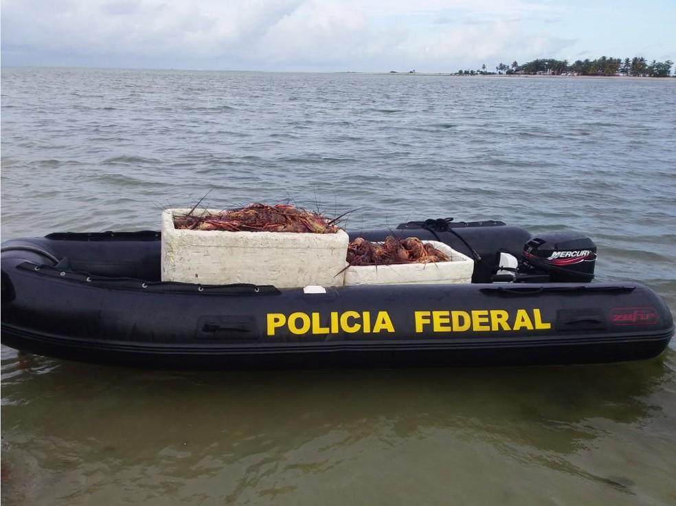 Lagostas foram doadas para instituição que trabalha com restaurante voltado ao público de baixa renda — Foto: Divulgação/Polícia Federal