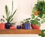 Como multiplicar suas plantas com mudas