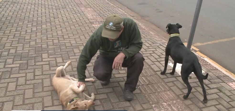 Voluntário de ONG ajuda a cuidar de cães em frente a hospital de Xanxerê — Foto: Reprodução/NSC TV