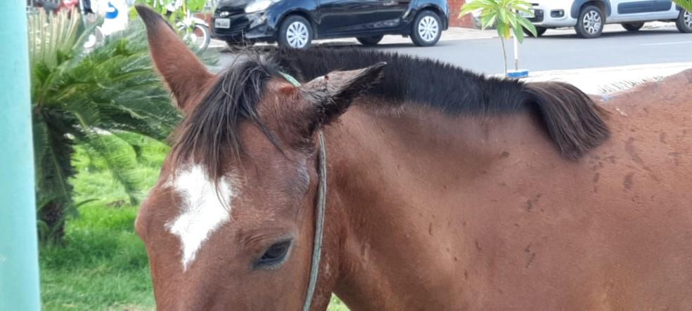 Cavalo é agredido por dono e abandonado em praça de Iguatu, no Ceará. — Foto: Wandenberg Belém/ SVM